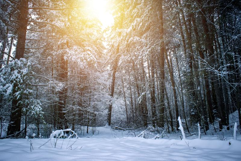 Beautiful winter landscape with snow covered trees in sunny day. stock photo