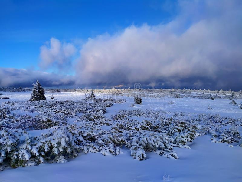Beautiful winter landscape. Sunny day, blue sky, white clouds, snow covers small trees. Krkonose Mountains, Czech Republic stock photography