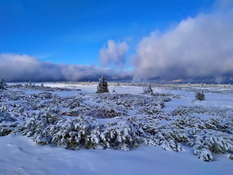 Beautiful winter landscape. Sunny day, blue sky, white clouds, snow covers small trees. Krkonose Mountains, Czech Republic royalty free stock photography