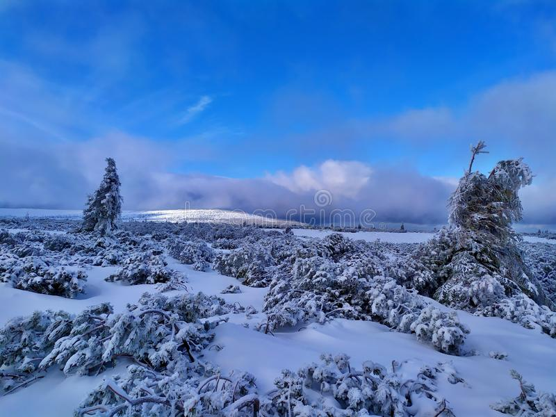 Beautiful winter landscape. Sunny day, blue sky, white clouds, snow covers small trees. Krkonose Mountains, Czech Republic stock photo