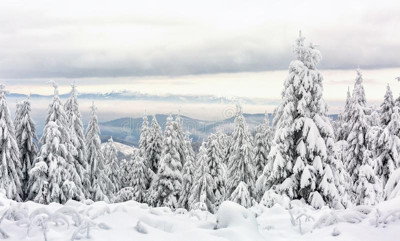 Winter mountain landscape. Beautiful winter mountain landscape. The trees are covered with a thick layer of snow royalty free stock photography