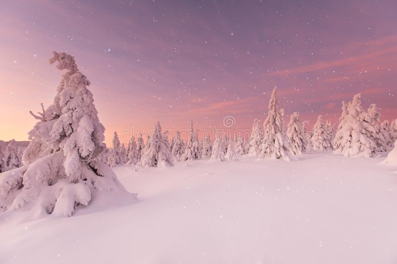 Beautiful winter landscape, trees covered with snow. royalty free stock image