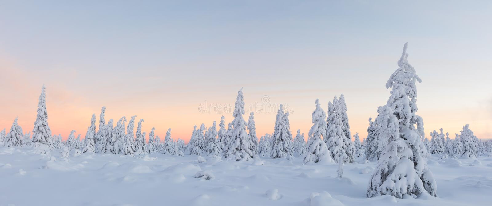 Beautiful winter landscape, trees covered with snow. royalty free stock images