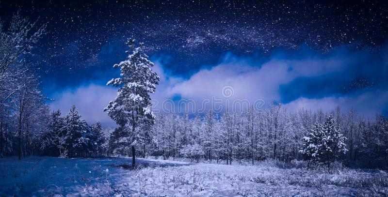 Beautiful winter night starry sky above the snow wood royalty free stock images
