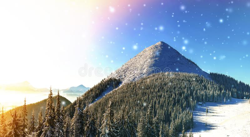 Beautiful winter panorama with fresh falling snow. Landscape wit. H spruce pine trees, blue sky with sun light and high Carpathian mountains on background stock images
