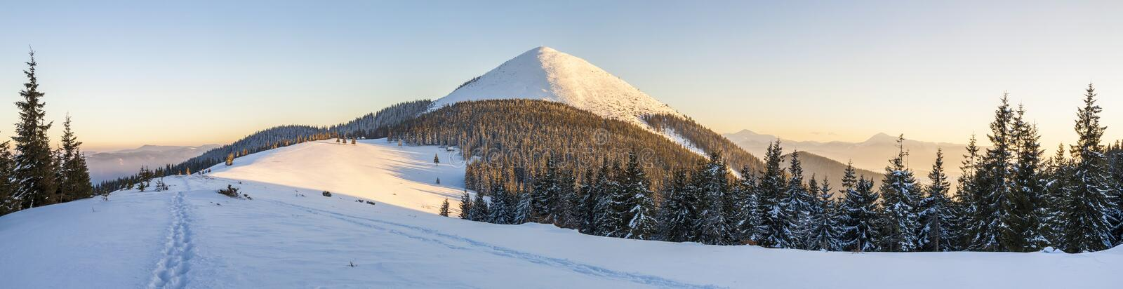 Beautiful winter panorama. Landscape with spruce pine trees, blu royalty free stock photography