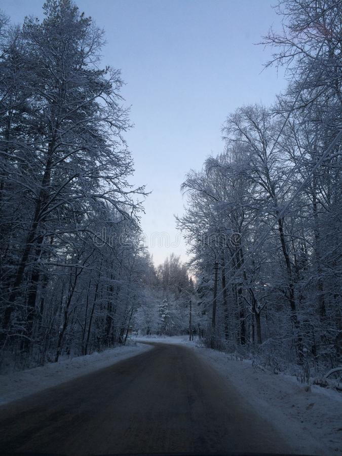 Beautiful winter road in forest St Petersburg royalty free stock image