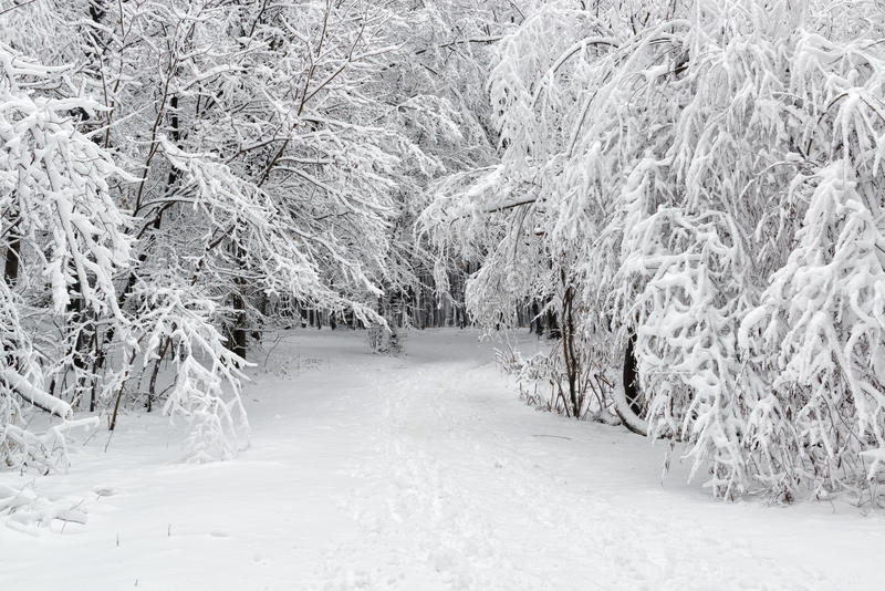 Beautiful winter scene. In the park stock images