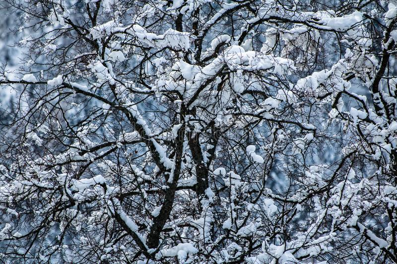 Close Up On Snowy Covered Nude Trees In Julian Alps In
