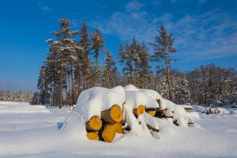 Beautiful winter snowbound forest with heap of tree log royalty free stock images