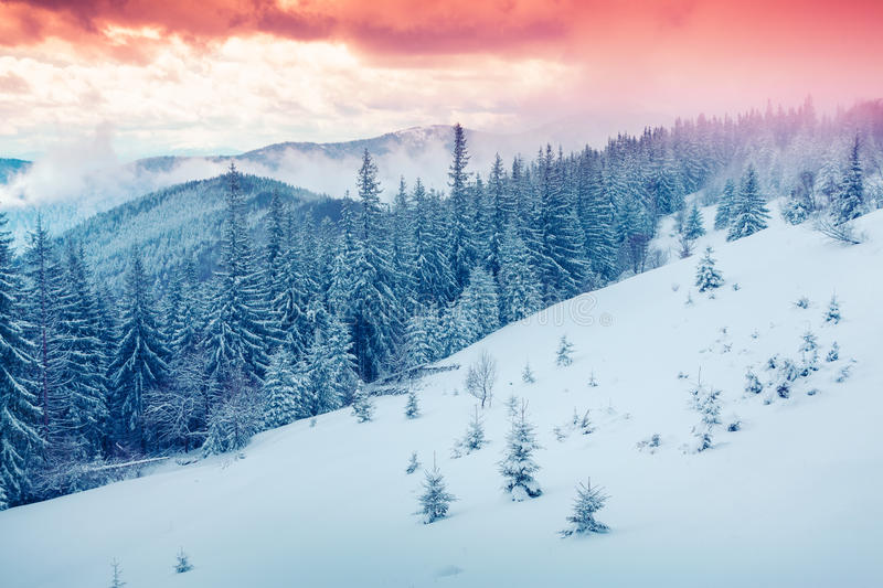 Beautiful winter sunrise in the Carpathian mountains. Lisniv ridge, Ukraine, Europe royalty free stock images