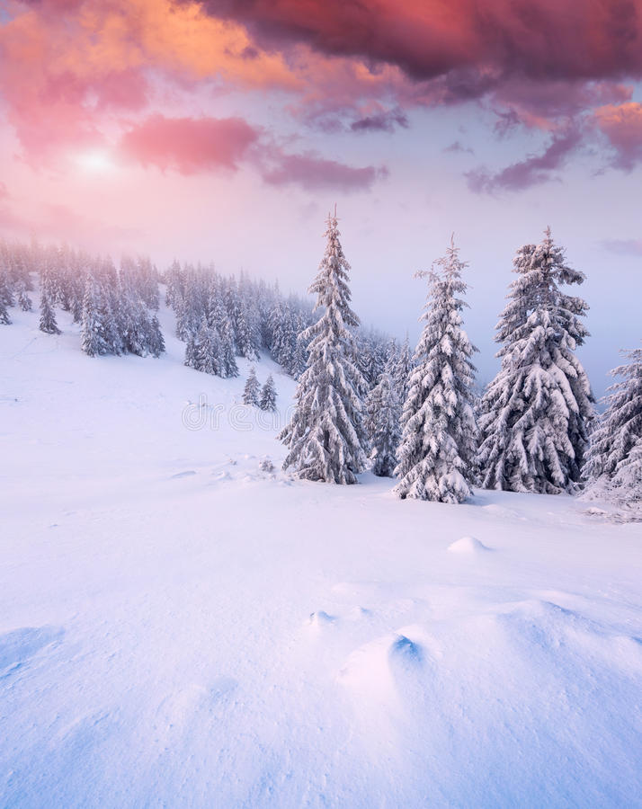 Beautiful winter sunrise in mountain forest. Beautiful winter sunrise in the mountain forest stock image