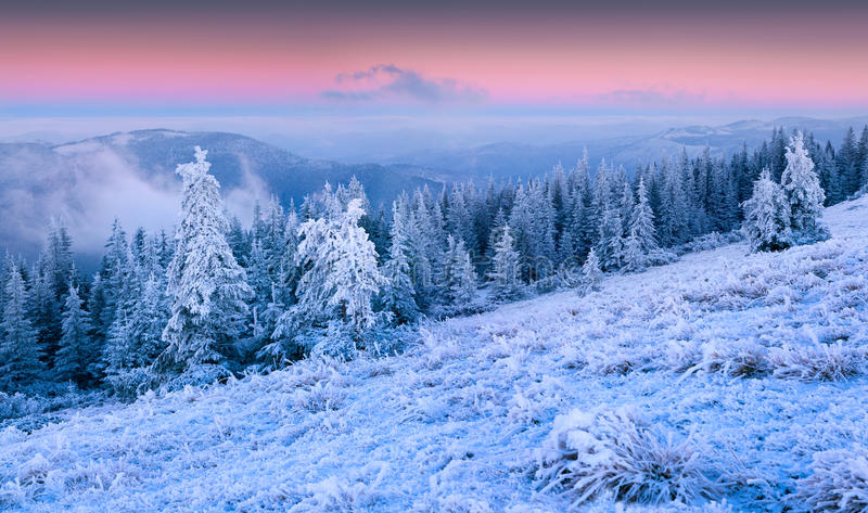 Beautiful winter sunrise in the mountain forest. First frost in december royalty free stock photography