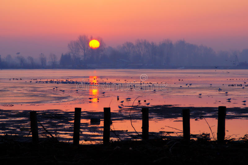 Beautiful Winter Sunrise. Rising sun behind trees on the lake with birds and branches in early cold morning in february stock photos