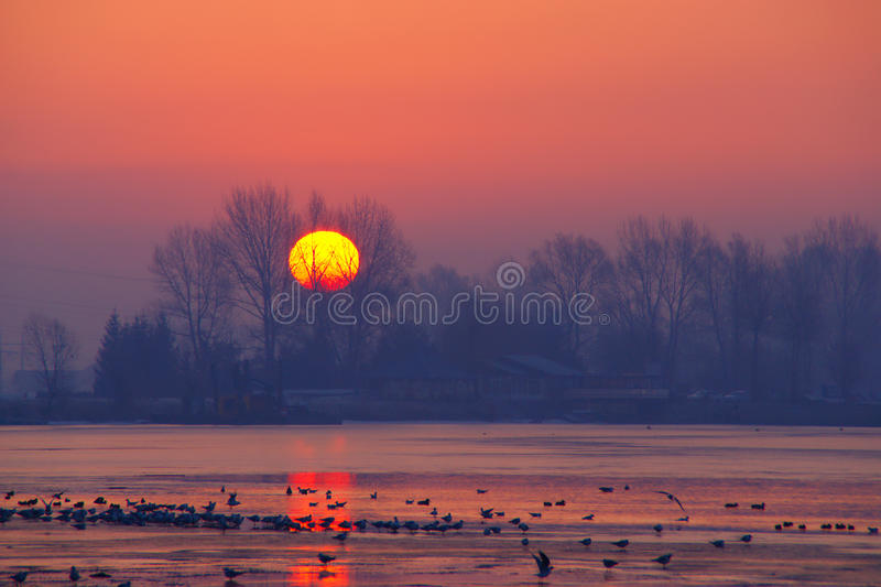Beautiful Winter Sunrise. Rising sun behind trees on the lake with birds in early cold morning in february royalty free stock images