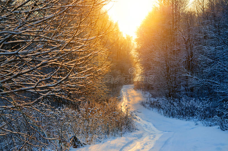 Beautiful winter sunset over curvy road in countryside. Beautiful winter sunset over curvy road among trees in countryside royalty free stock image