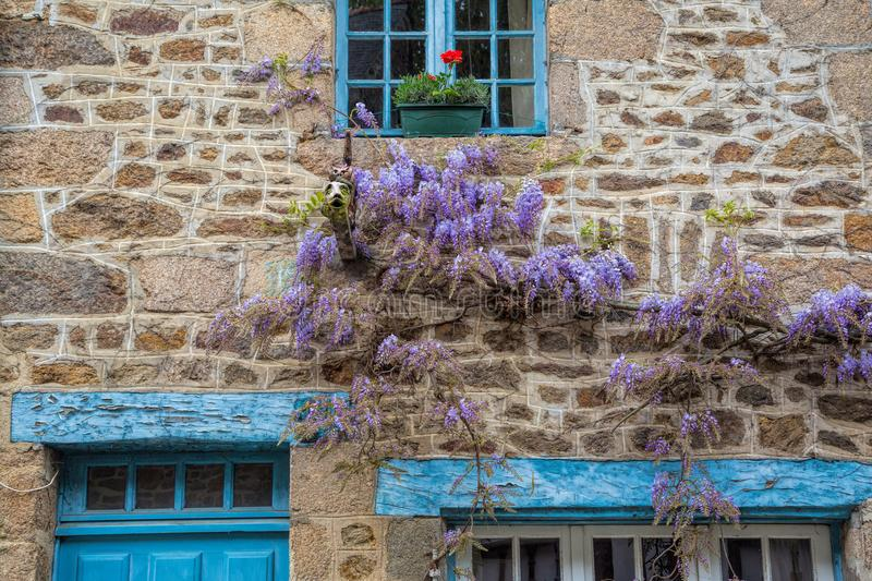 Wisteria on a cottage wall in rural France stock images
