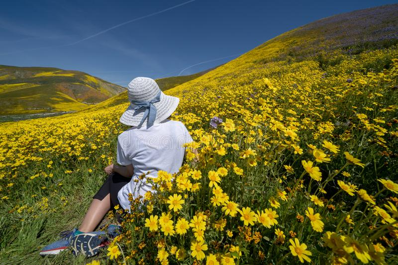 Beautiful woman with back facing camera, sitting in a field of yellow wildflowers. Concept for spring allergy season.  royalty free stock photography