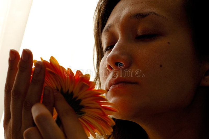 Beautiful woman with daisy flower. Beautiful young woman in front of the window in the morning with a daisy flower in hands isolated on white background stock photos