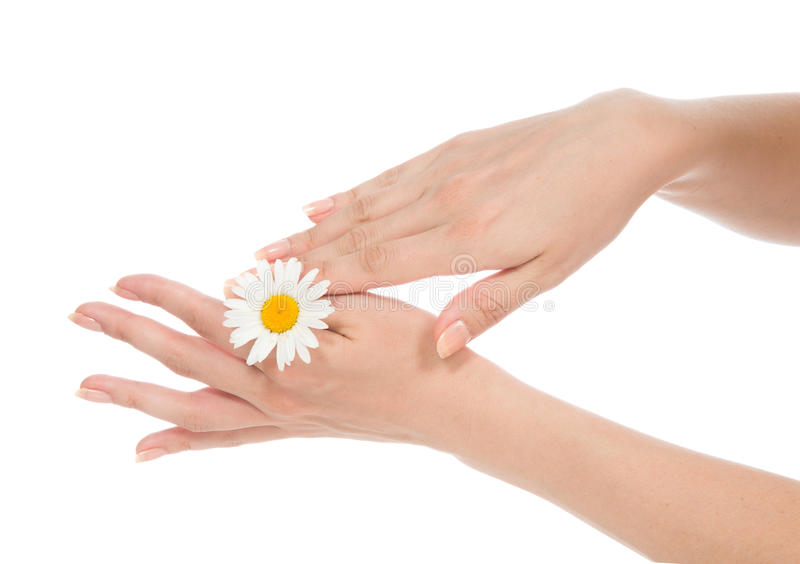 Beautiful woman hands french manicure with camomile daisy flower stock photos