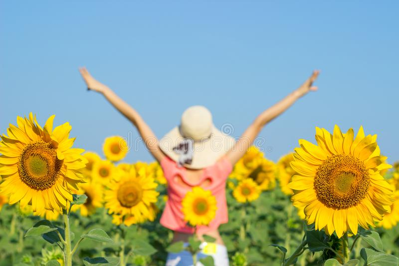 Beautiful woman with hat on her head in sunflowers field stock photos