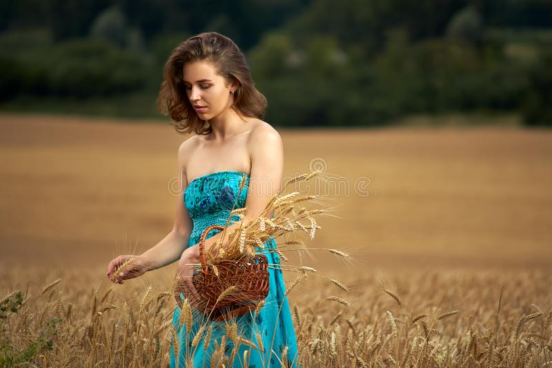 Beautiful woman holding a basket full of ripe spikelets. Agricultural field. Nature, harvesting and eco stock images