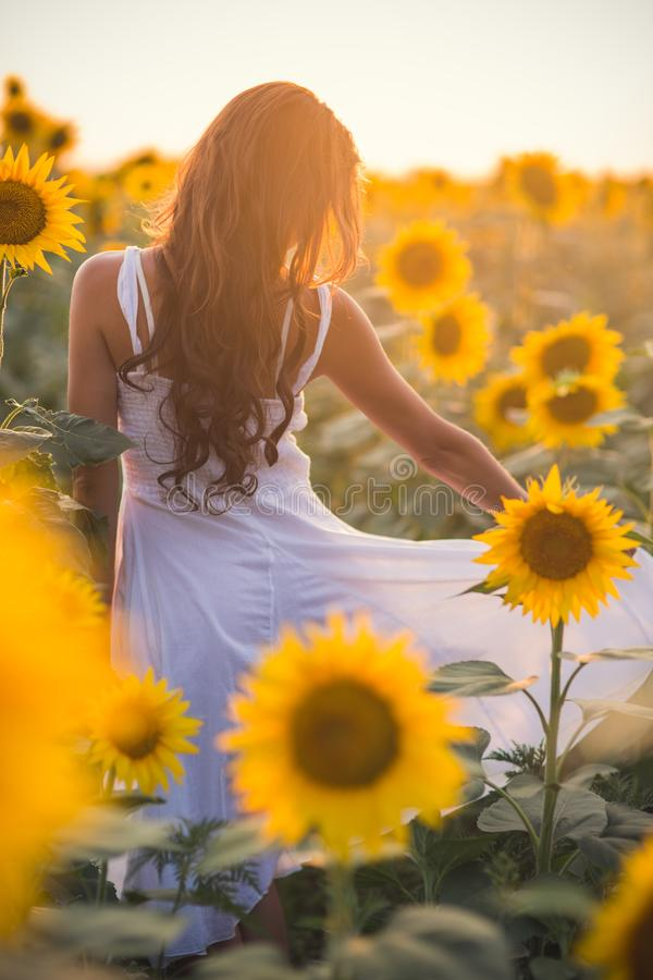 Beautiful woman with long hair in a field of sunflowers in the s royalty free stock images