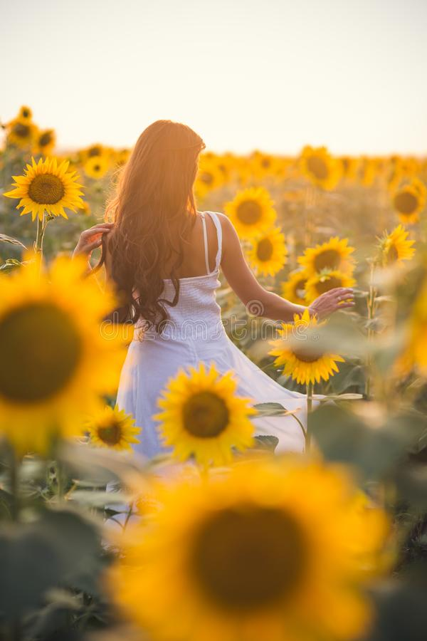 Beautiful woman with long hair in a field of sunflowers in the s stock photo