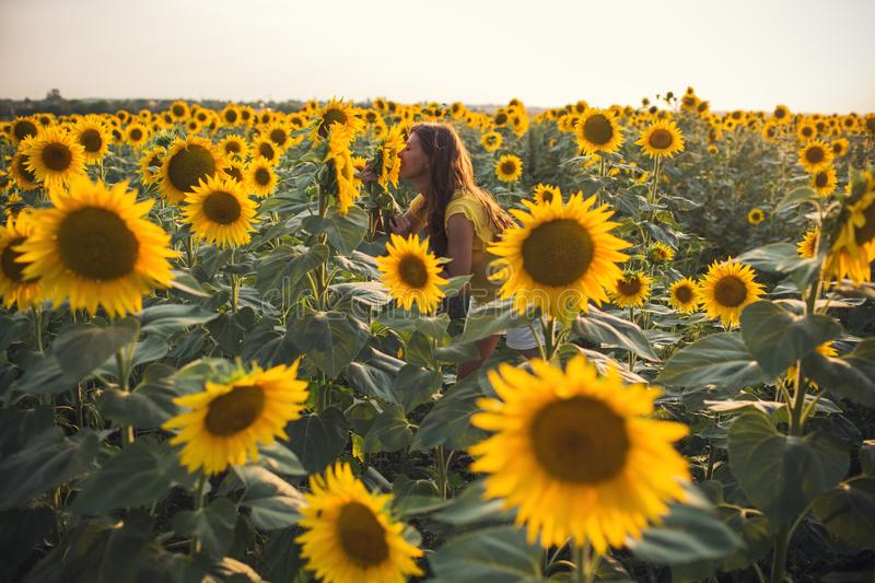Beautiful woman with long hair in a field of sunflowers in the s stock image