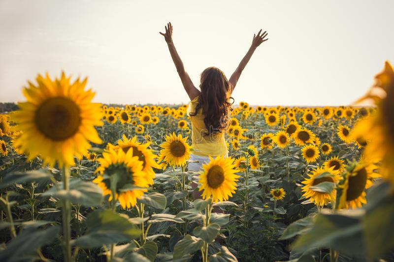 Beautiful woman with long hair hands up in a field of sunflowers stock images