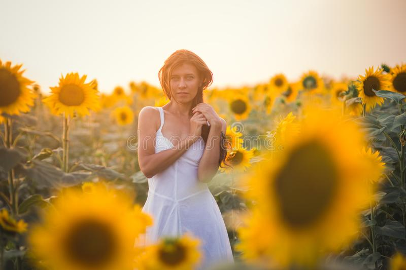 Beautiful woman with long hair in a field of sunflowers in the s royalty free stock image