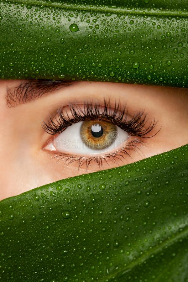 Beautiful Woman with long lashes on the background of a leaf of monstera with water droplets.. Eyelash extension procedure stock images