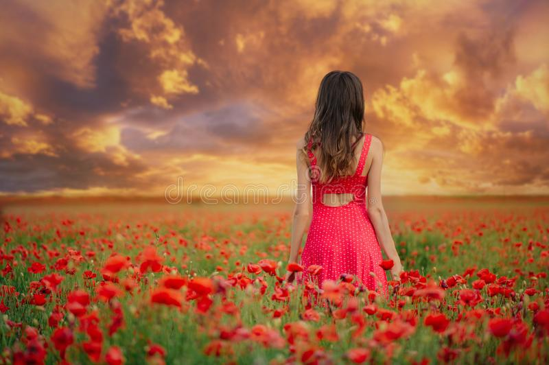 Beautiful woman in a red dress in a poppy field at sunset from the back, warm toning, happiness and a healthy lifestyle royalty free stock image