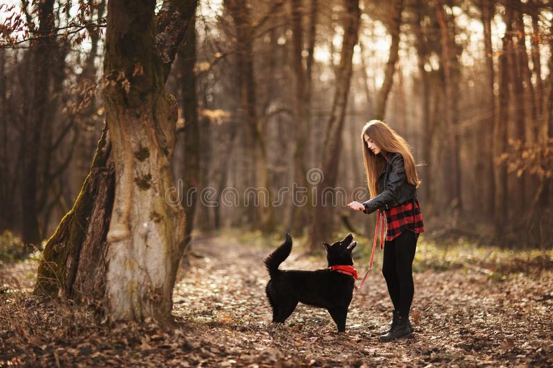 Beautiful woman stroking her dog outdoors. Pretty girl playing and having fun with her pet by name Brovko Vivchar.  royalty free stock photo