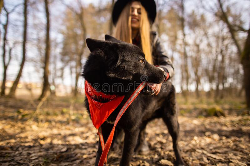 Beautiful woman stroking her dog outdoors. Pretty girl playing and having fun with her pet by name Brovko Vivchar.  royalty free stock photography