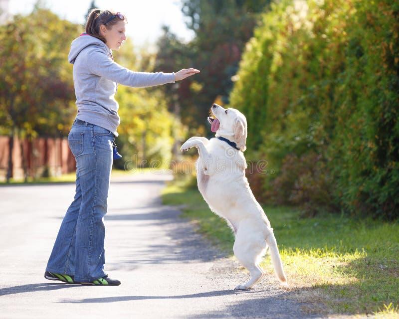 Beautiful woman training dog royalty free stock photography