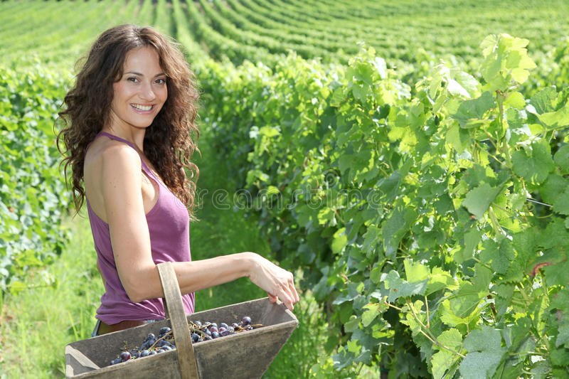 Download Beautiful Woman In Wine Rows Stock Image - Image of year, winegrower: 15739703