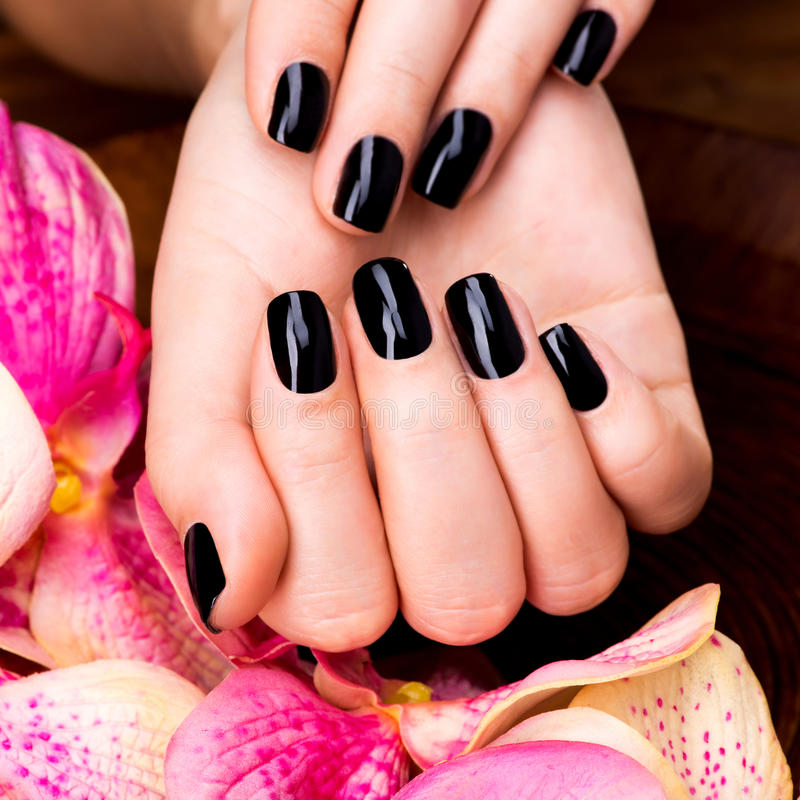 Free Manicure Beauty Hands Makeover: Beautiful Women Hands With Black Manicure Stock Photo