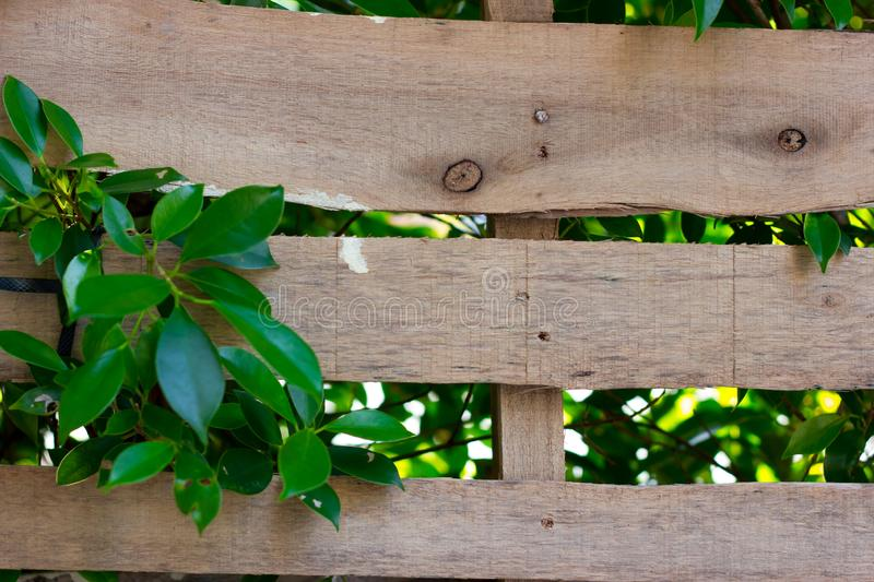 Beautiful wood with leaf inserts in wood. Natural background royalty free stock photography