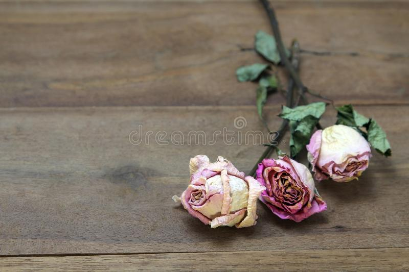 Beautiful wooden background with dried pink roses. royalty free stock images
