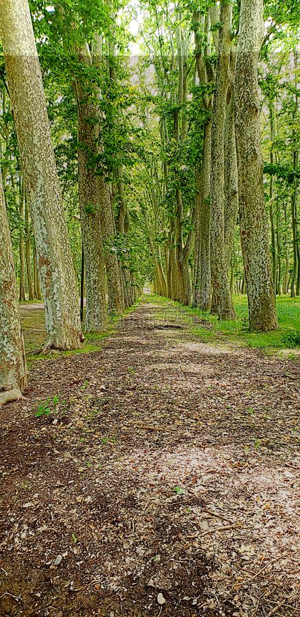 Beautiful wooden landscape stock image