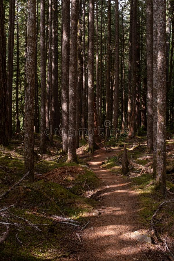 A beautiful woodland walk in dappled forest in the Olympic National Park, Washington State, USA stock images