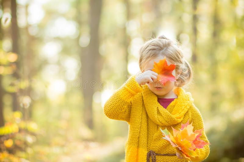 Beautiful 5 years old blonde girl hides her face behind a maple leaf on a background of autumn sunny forest.Autumn stock photos