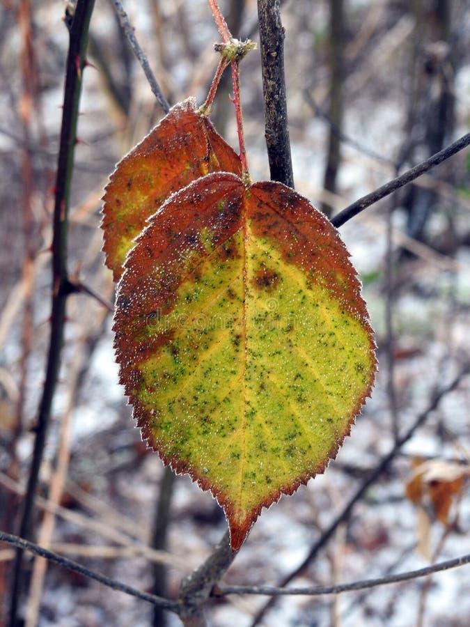 Beautiful yellow autumn tree leaf, Lithuania stock photography
