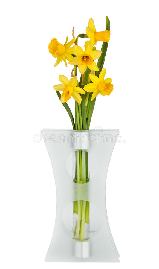 Beautiful Yellow Daffodils flowers. In vase isolated on white background stock photography