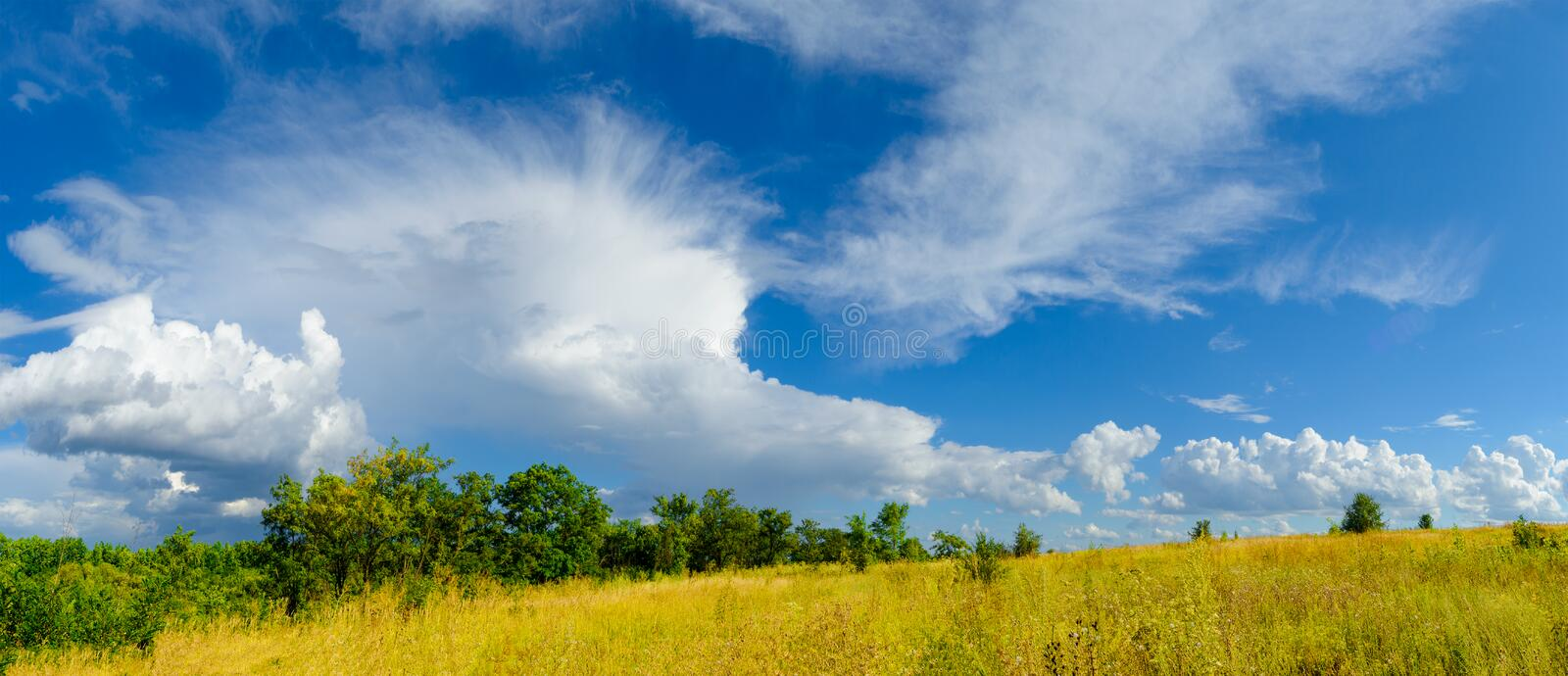 Beautiful Yellow Field and Green Forest under Dramatic Sky stock photography