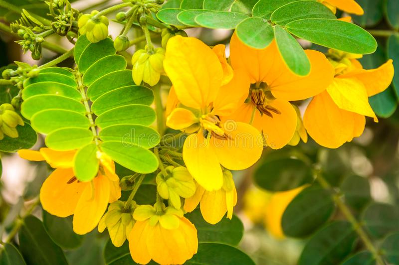 Beautiful yellow flower from the nature stock photography