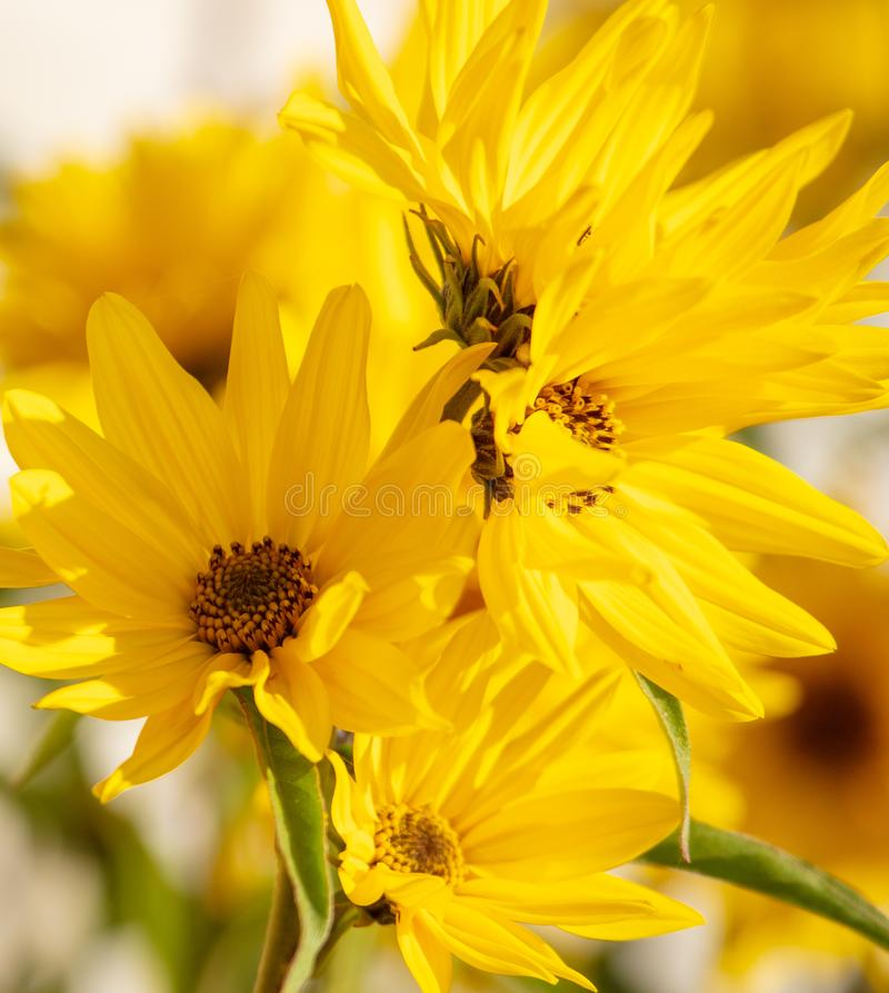 Beautiful yellow flower in the park stock photos