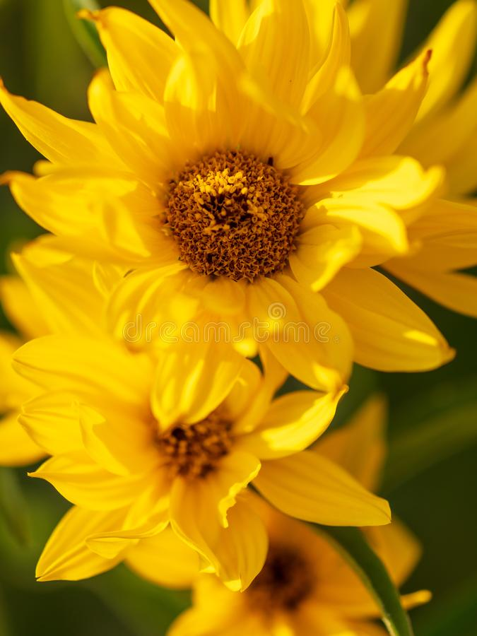 Beautiful yellow flower in the park stock photo
