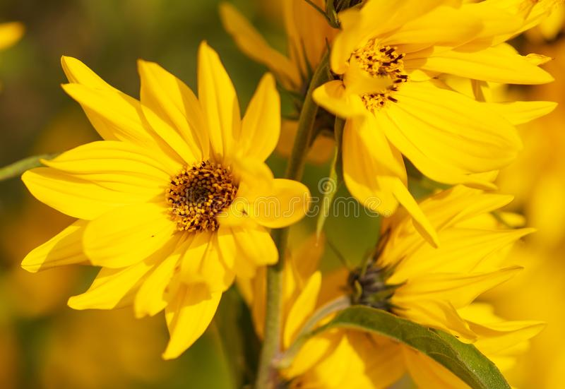 Beautiful yellow flower in the park stock photography